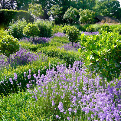 Of All The Sensory Delights That A Garden Offers, The Most Romantic Of All  Is Fragrance! Using Fragrant Plants In Garden Design Adds Another Level Of  ...