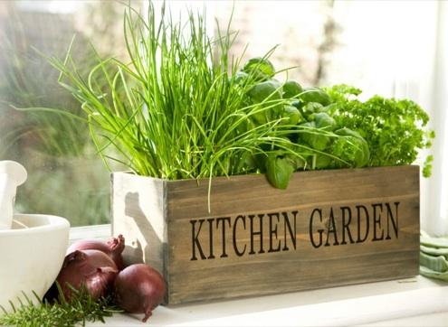 Create your own little indoor herb garden