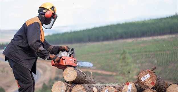 New VR technology to make SA forestry chainsaw training safer