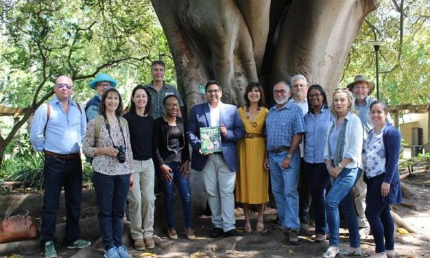 Company's Garden tree crowned a champion