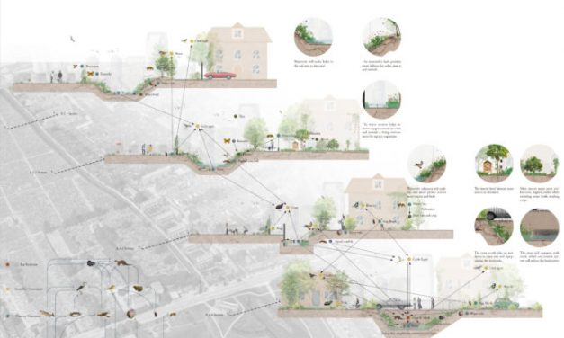 Landscape architecture Insights | The next generation | Part 2 – Urban Rewilding
