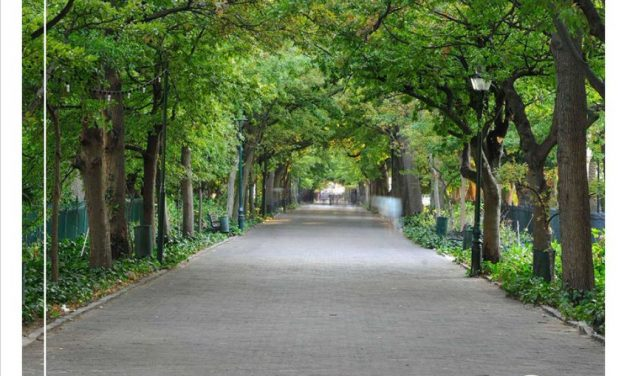 In light of arbor week: Caring for Cape Town's green canopy is as easy as planting a tree