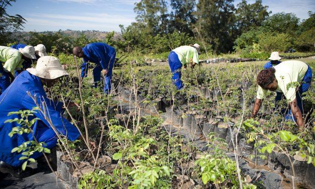Buffelsdraai Reforestation Project gains international recognition