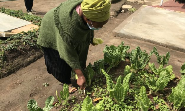 City partners with SA Food Lab to stimulate agrarian development